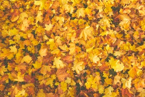autumn-autumn-colours-bright-756903